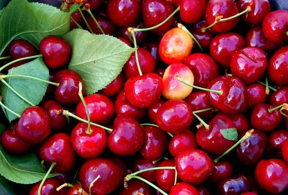 农场摘樱桃:收获周末好心情
